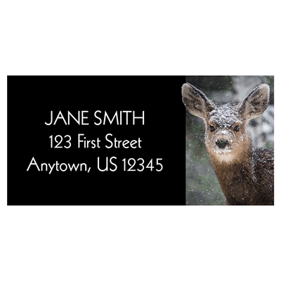 Fawn In Snow Address Label