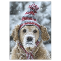 Frosty Retriever Card