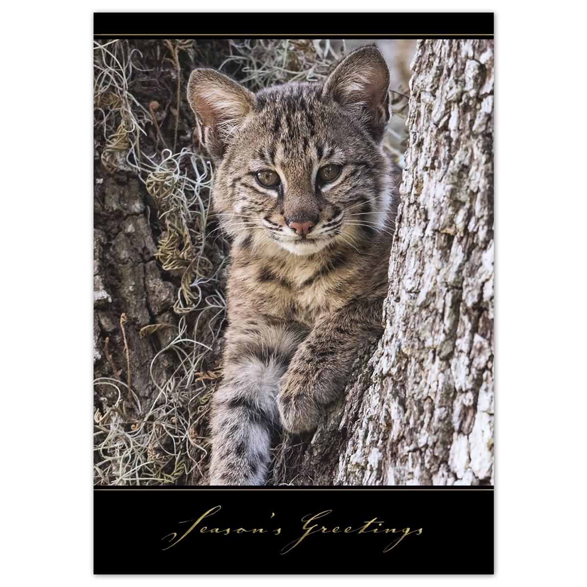 Baby Bobcat Card