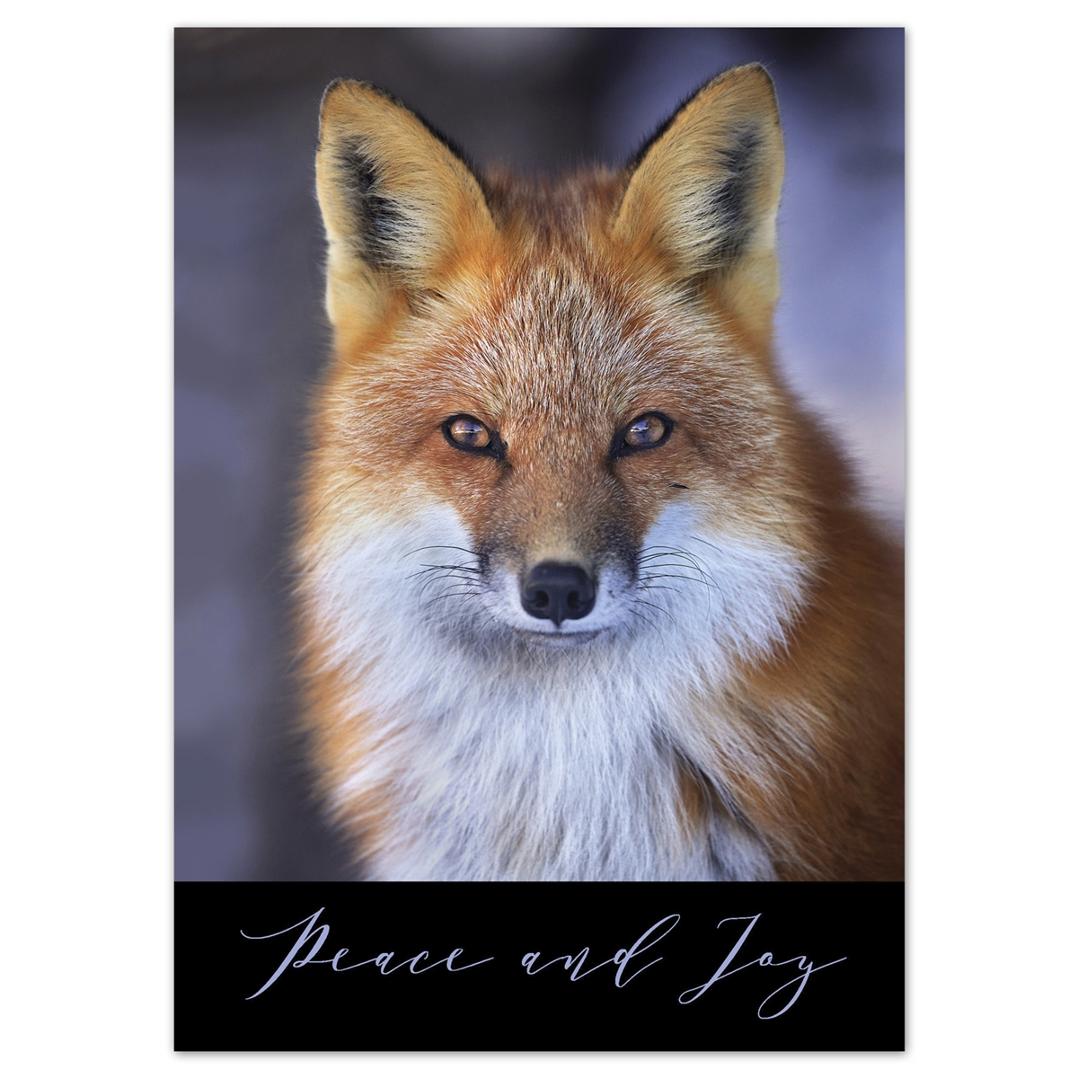 Red Fox Card