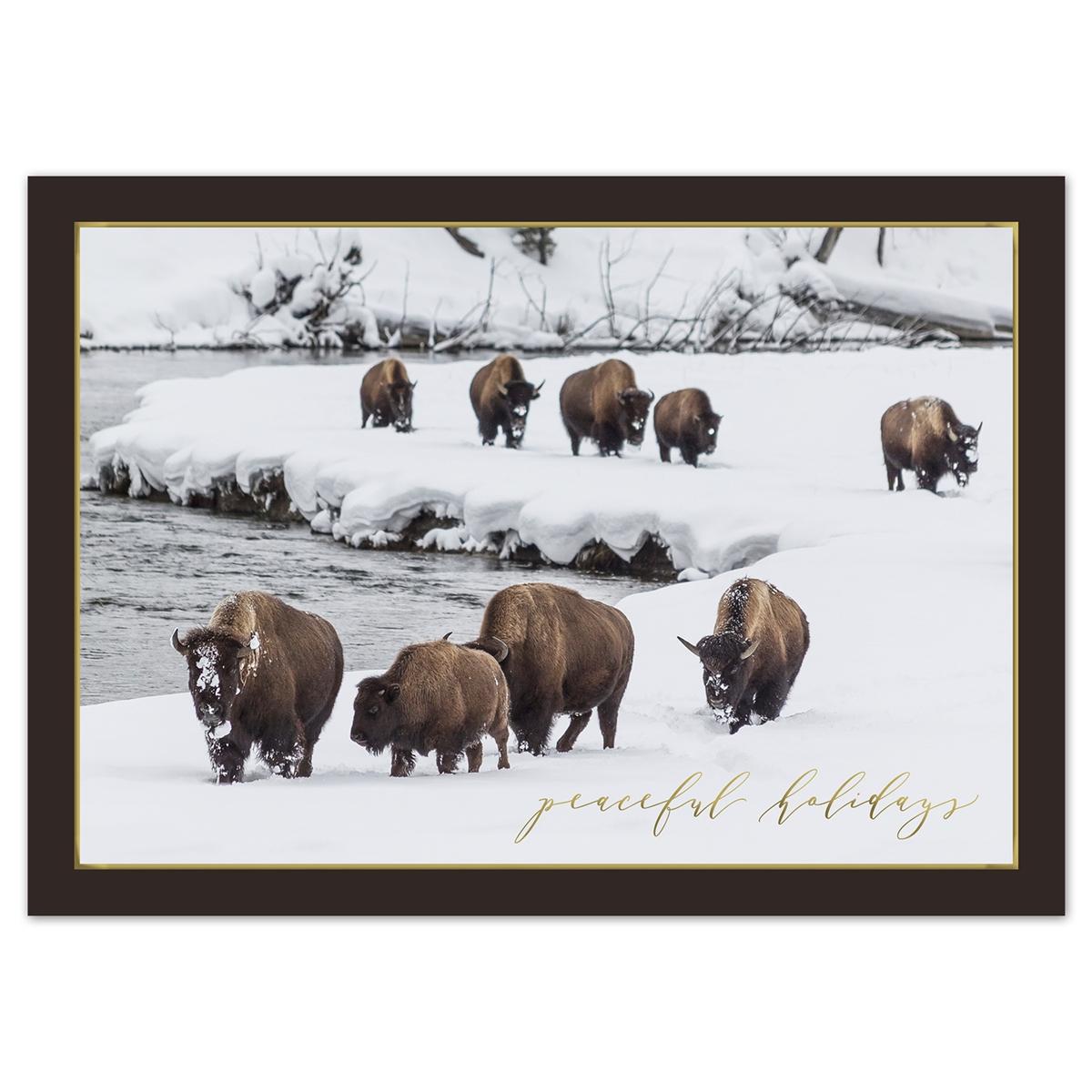 Winter Bison Card