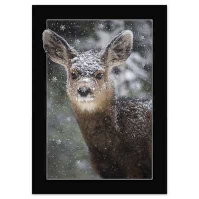Fawn In Snow Card