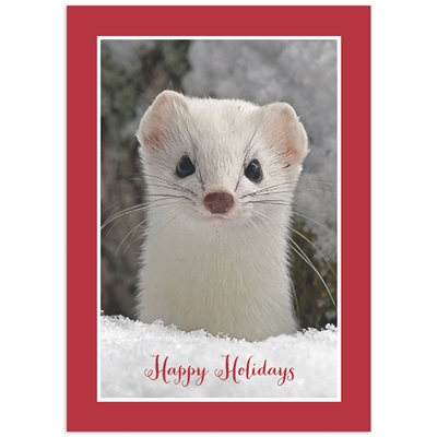Ermine in Winter Coat Card
