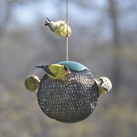 Green Seed Sphere Feeder