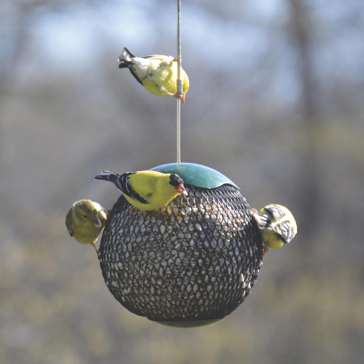 Green Seed Sphere Feeder