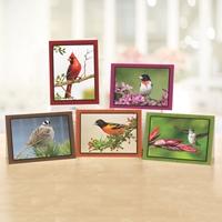 Brilliant Birds Note Card Assortment