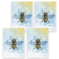 Bee Card Set