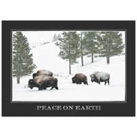 Bison in Winter Card
