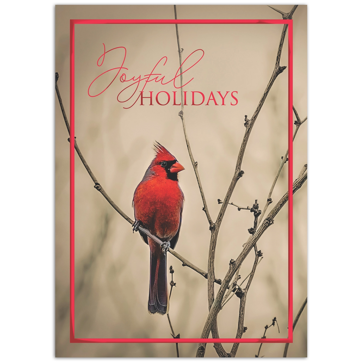 Cardinal in Winter Holiday Cards
