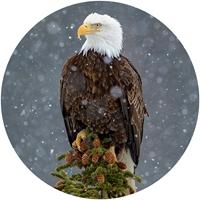 Peaceful Eagle Envelope Seal
