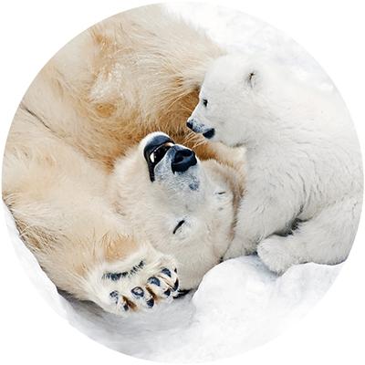 Polar Bear Play Envelope Seal