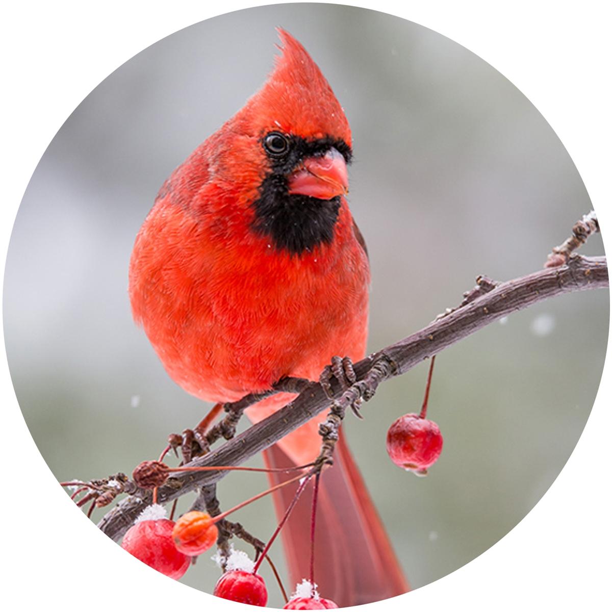 Berry Branch Cardinal Envelope Seal