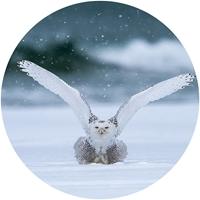 Snowy Owl Envelope Seal