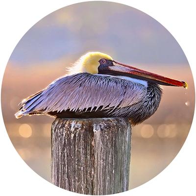 Resting Pelican Envelope Seal