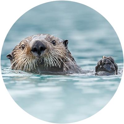 Sea Otter Envelope Seal