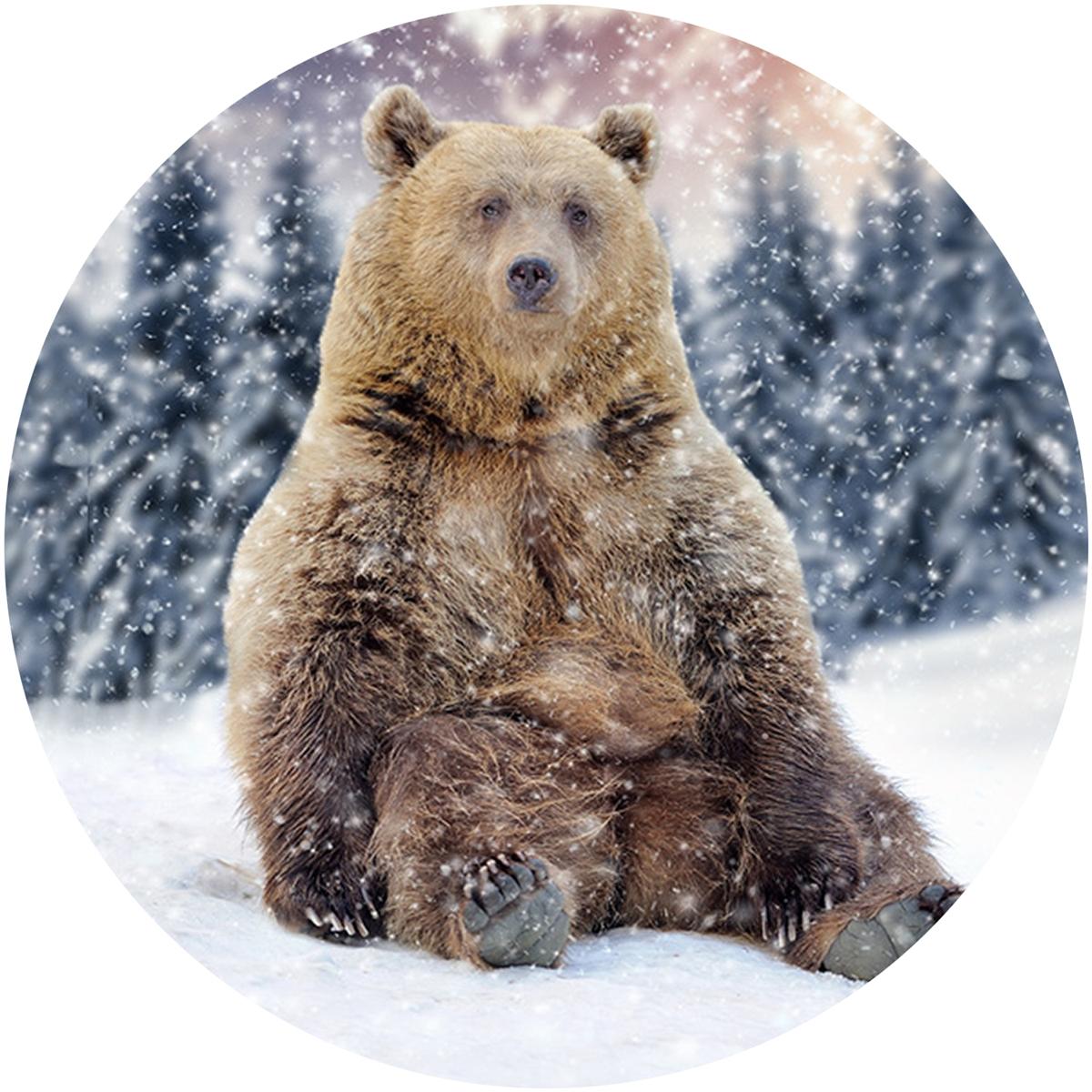 Winter Time Bear Envelope Seal