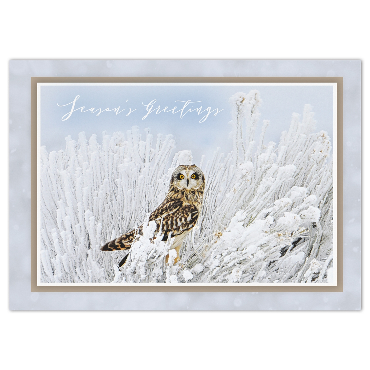 Short-Eared Owl Holiday Cards