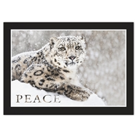 Snow Leopard Holiday Cards