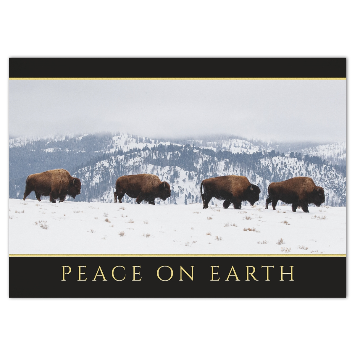 Bison in the Snow Holiday Cards