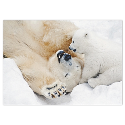 Polar Bear Play Holiday Cards