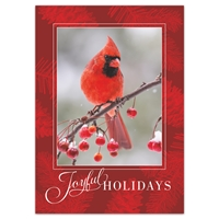 Berry Branch Cardinal Holiday Cards