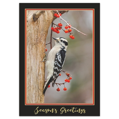 Downy Woodpecker Holiday Cards
