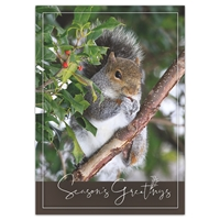 Squirrel in Holly Holiday Cards