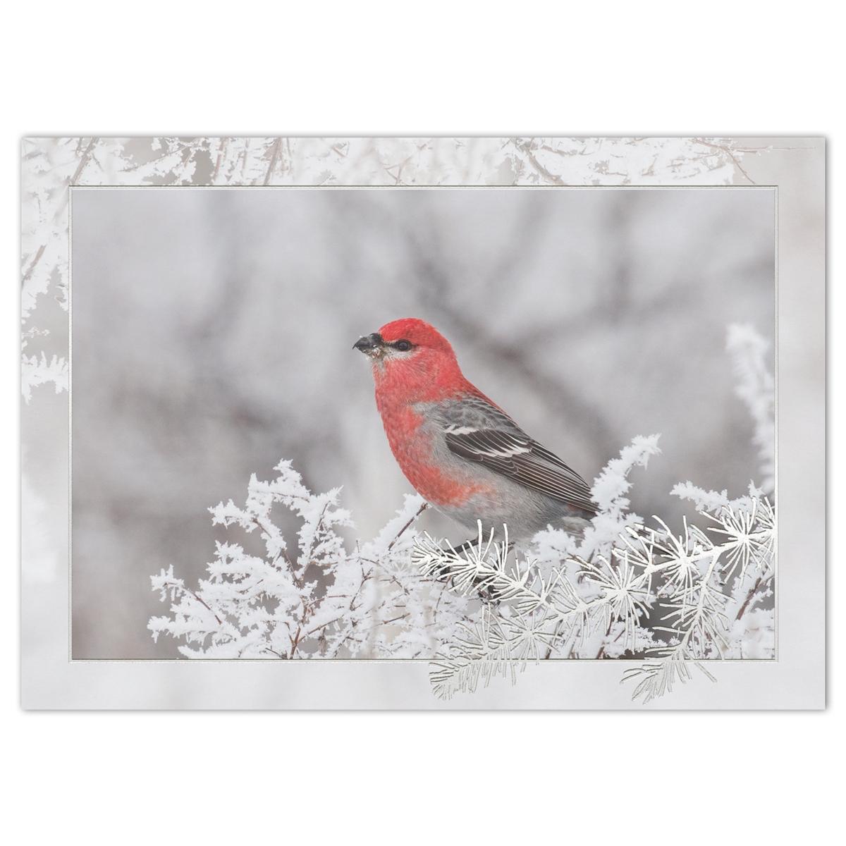 Pine Grosbeak Holiday Cards