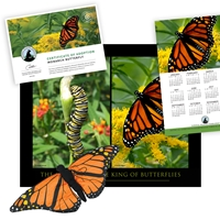 Adopt a Monarch Butterfly