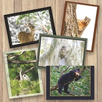2021 Trees for Wildlife Cards