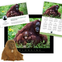 Adopt an Orangutan