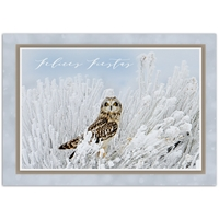 Short-Eared Owl - Spanish Holiday Cards