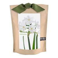 Paperwhite Grow Kit