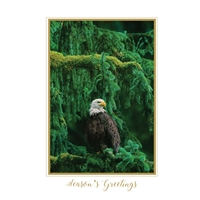 Bald Eagle in Fir - Trees for Wildlife™ Card