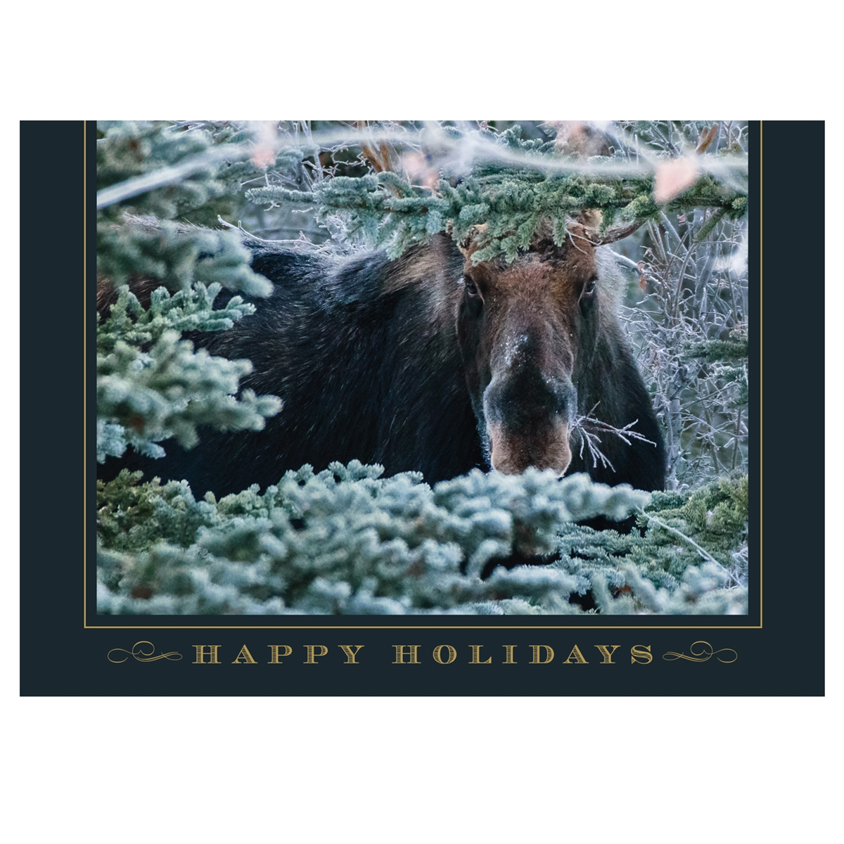 Hello There Mr. Moose Trees for Wildlife™ Card