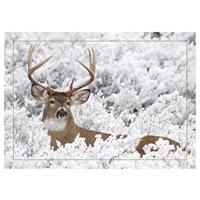 Buck in Winter Card