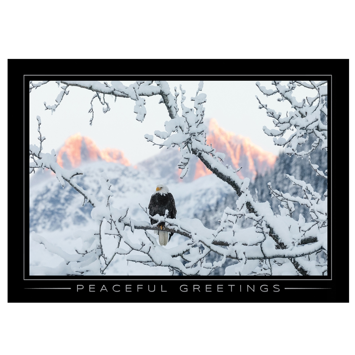Bald Eagle on a Cold Winter Morning Card