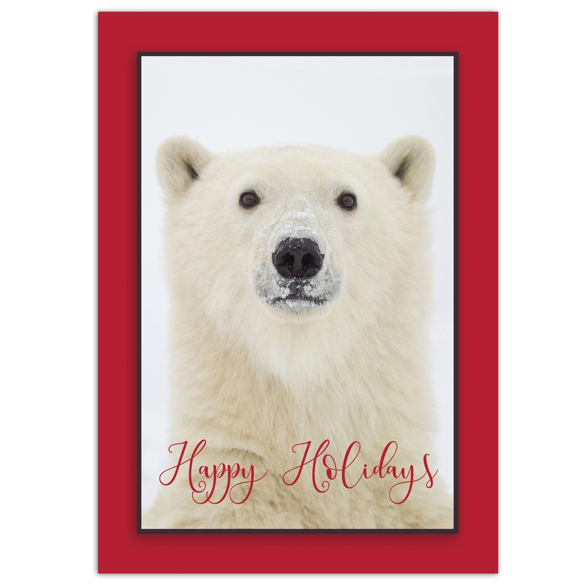 Yearling Polar Bear Card