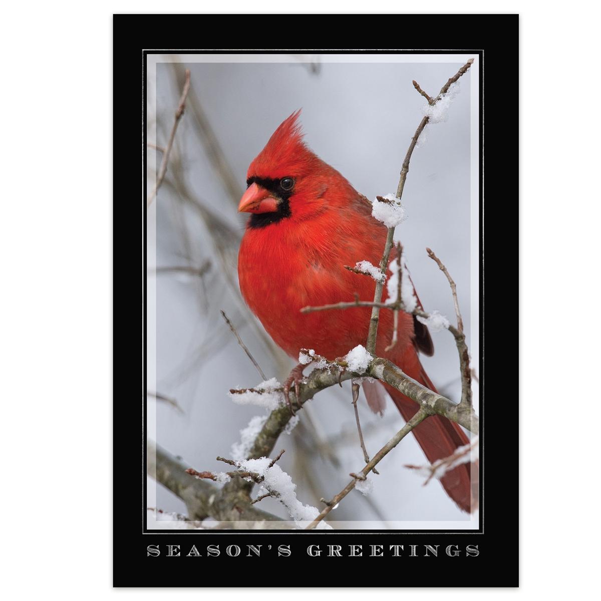 Scarlet Greetings Card