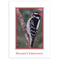Downy Woodpecker in Snow Card