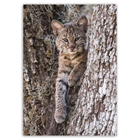 Baby Bobcat - Trees for Wildlife Card