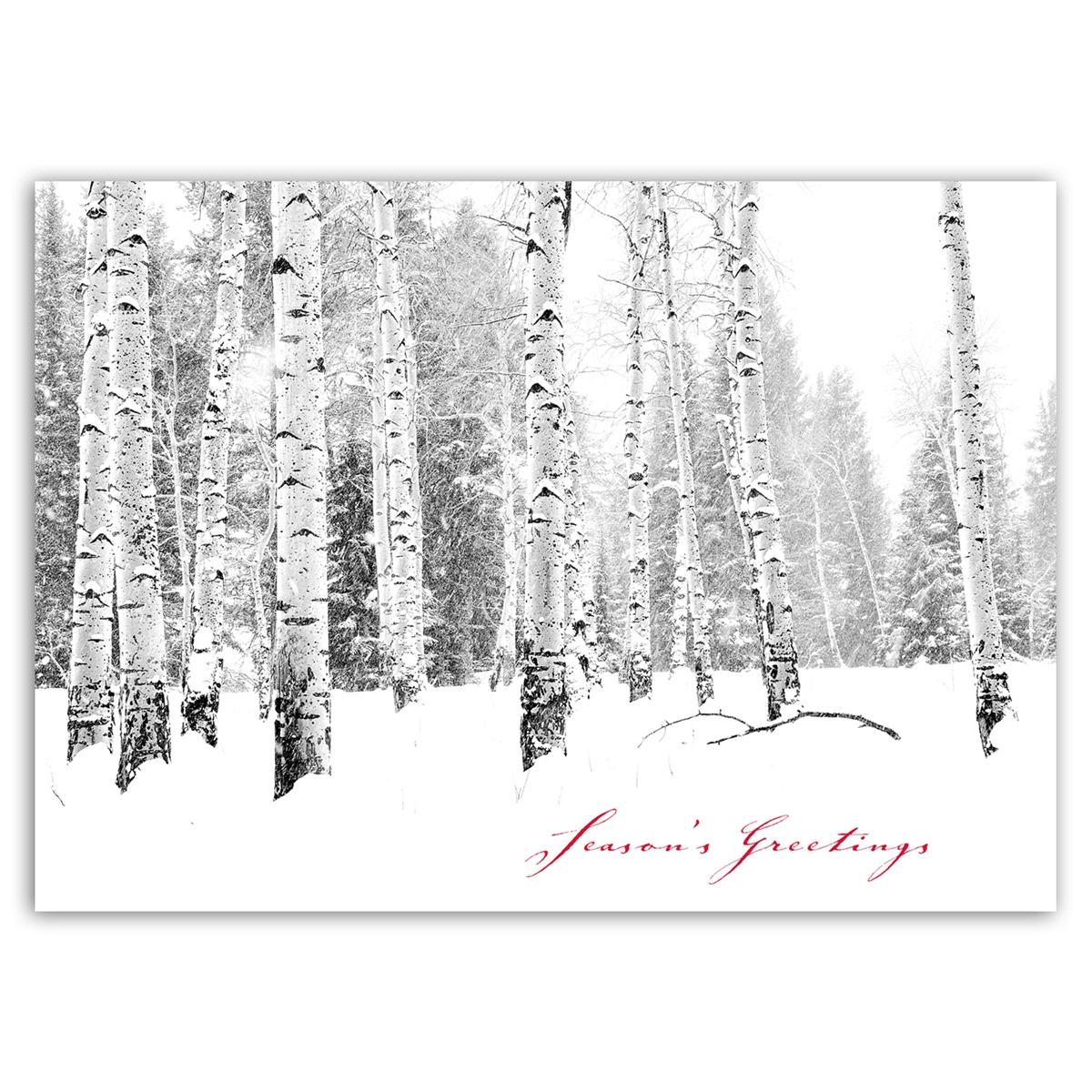 Aspens in the Snowstorm - Trees for Wildlife Card