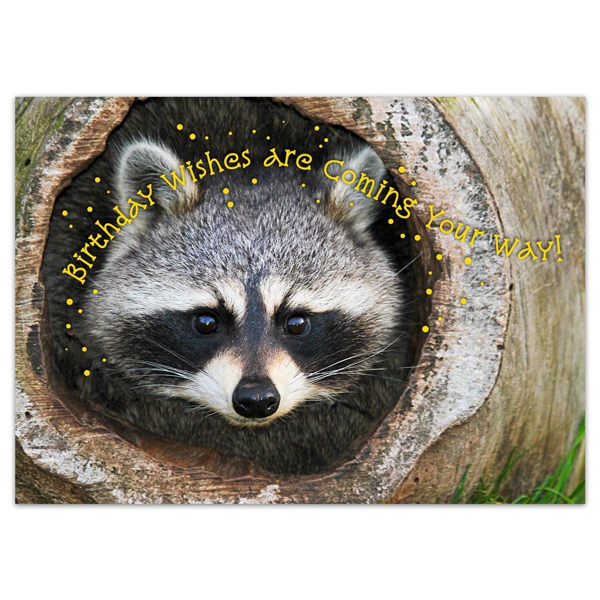 Baby Raccoon Birthday Card