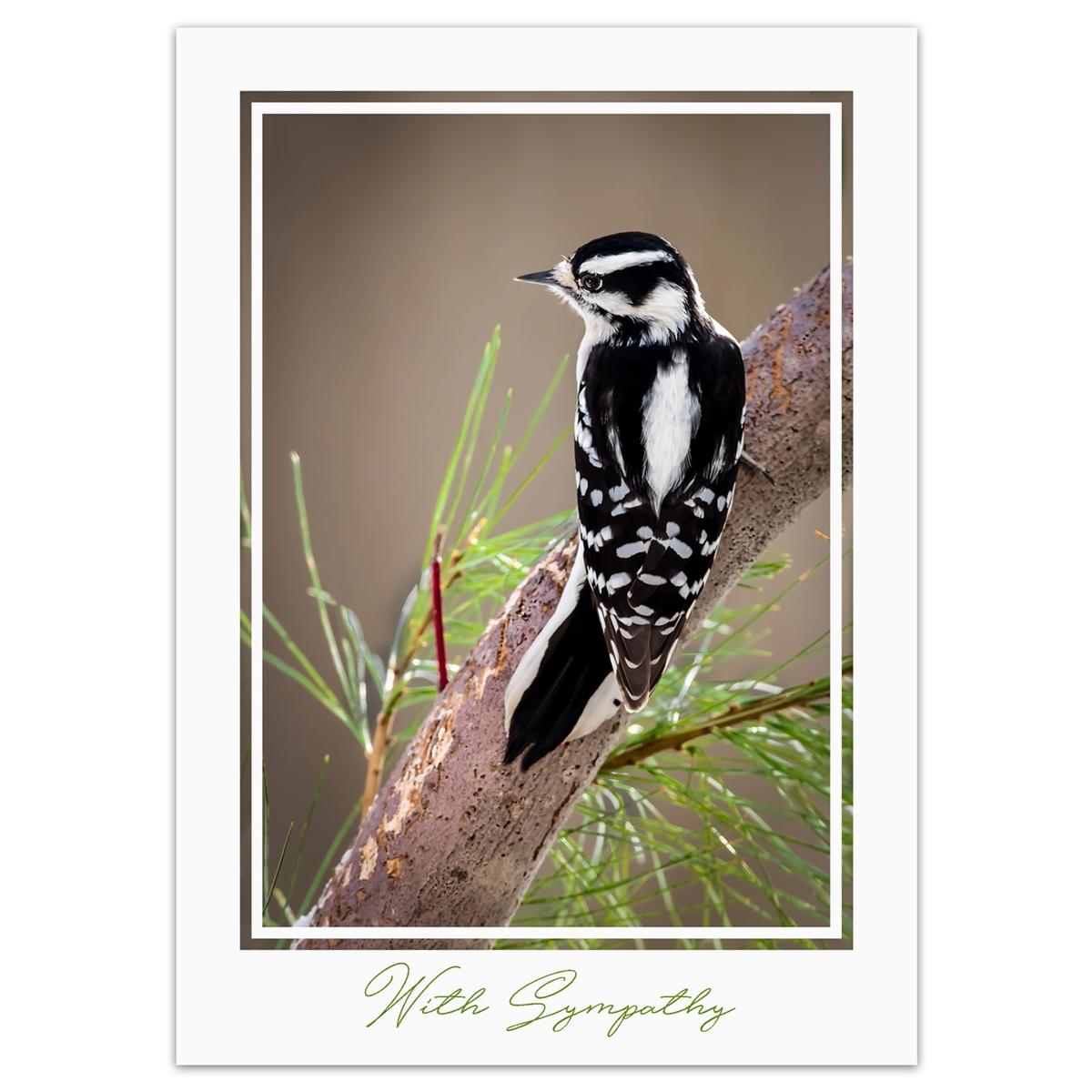 Downy Woodpecker Sympathy Card