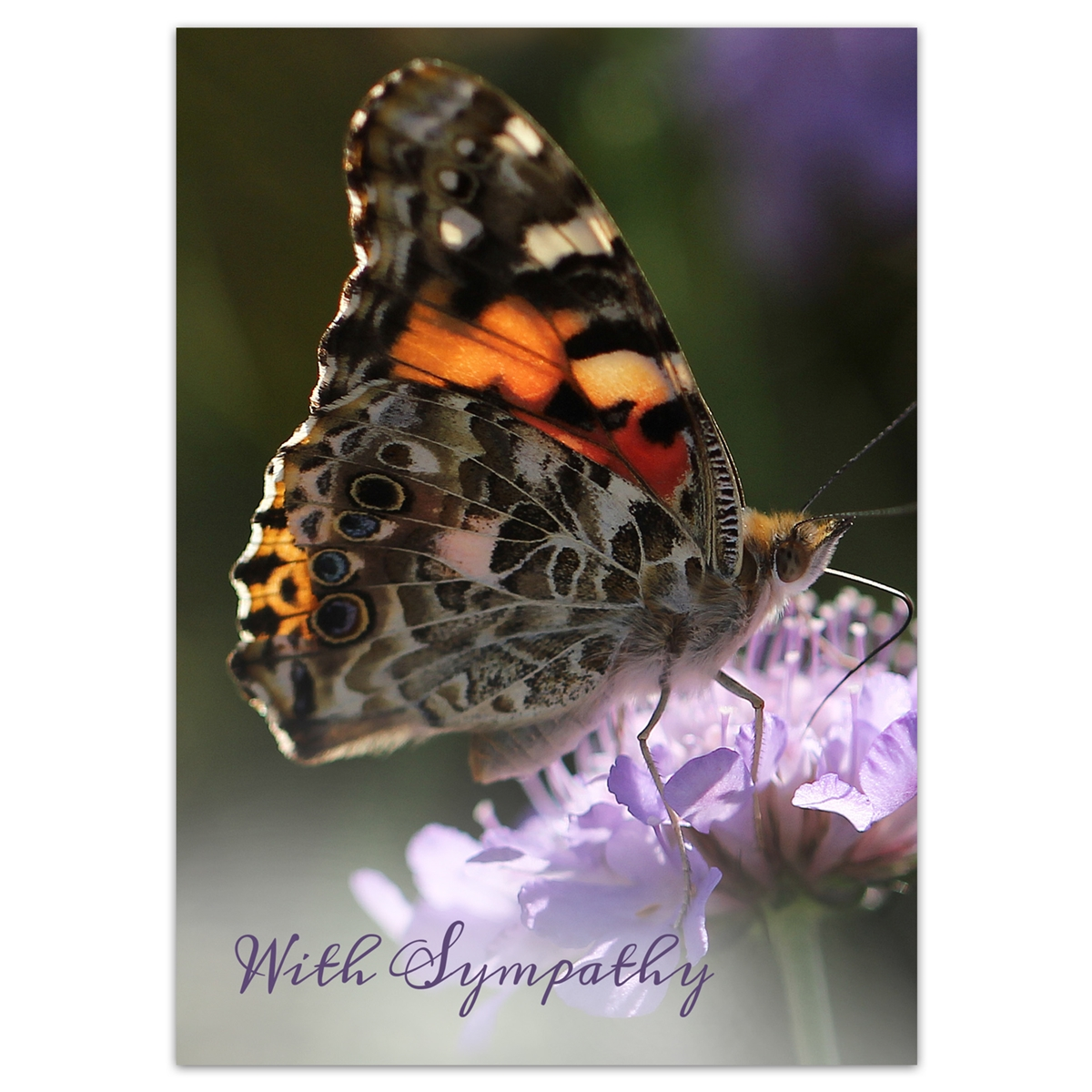 American Painted Lady Butterfly Sympathy Card