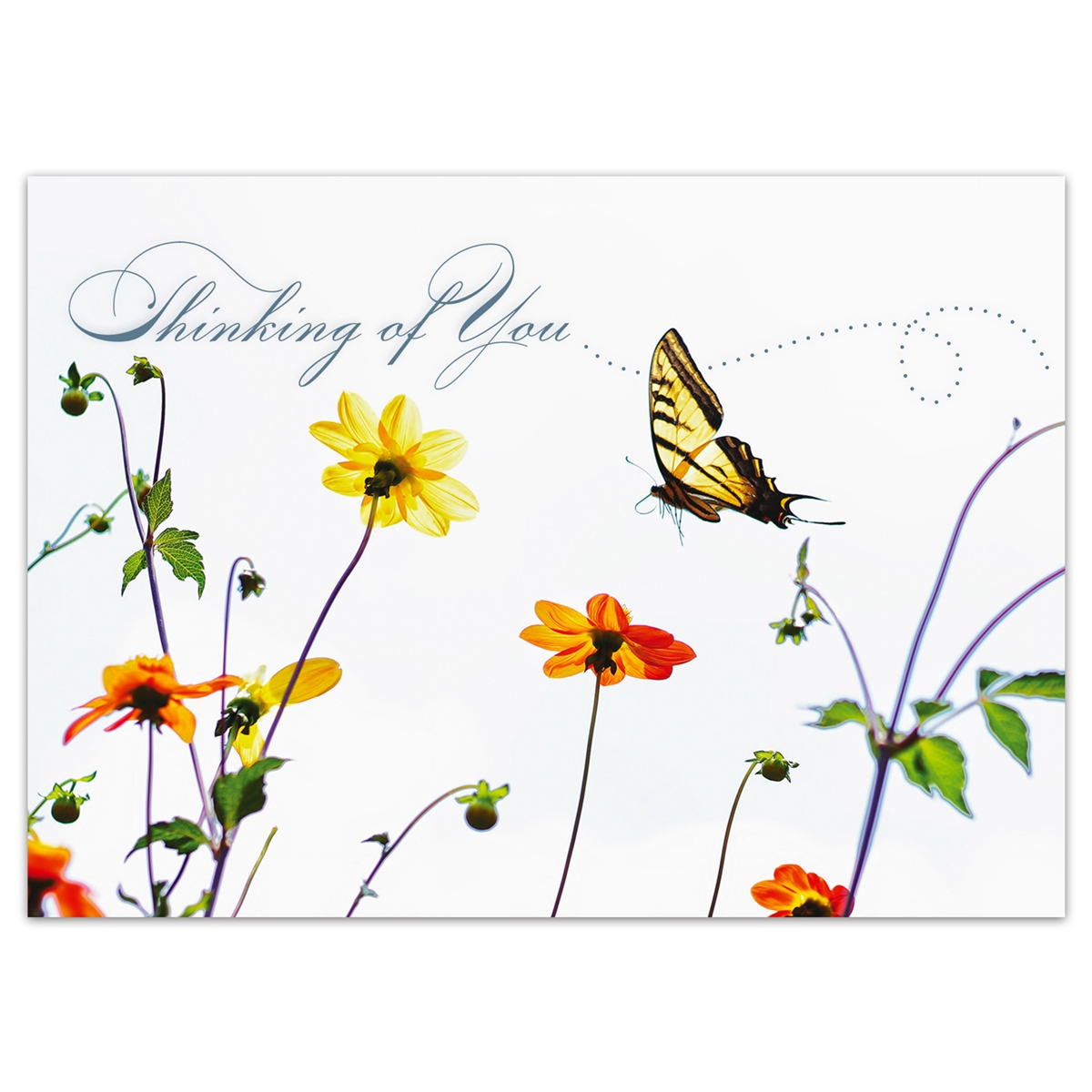 Tiger Swallowtail Butterfly Thinking of You Card