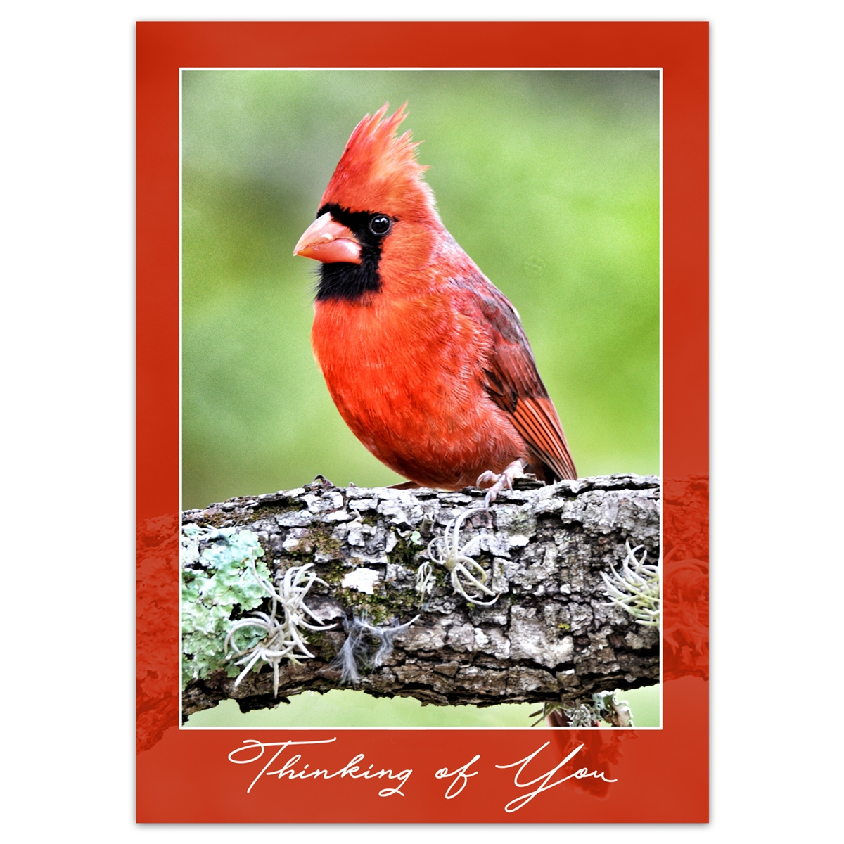 Northern Cardinal Thinking of You Card