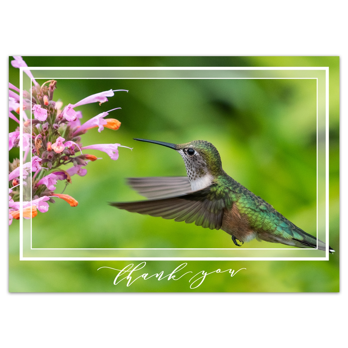 Hummingbird Feeding on Mint Blooms Thank You Card