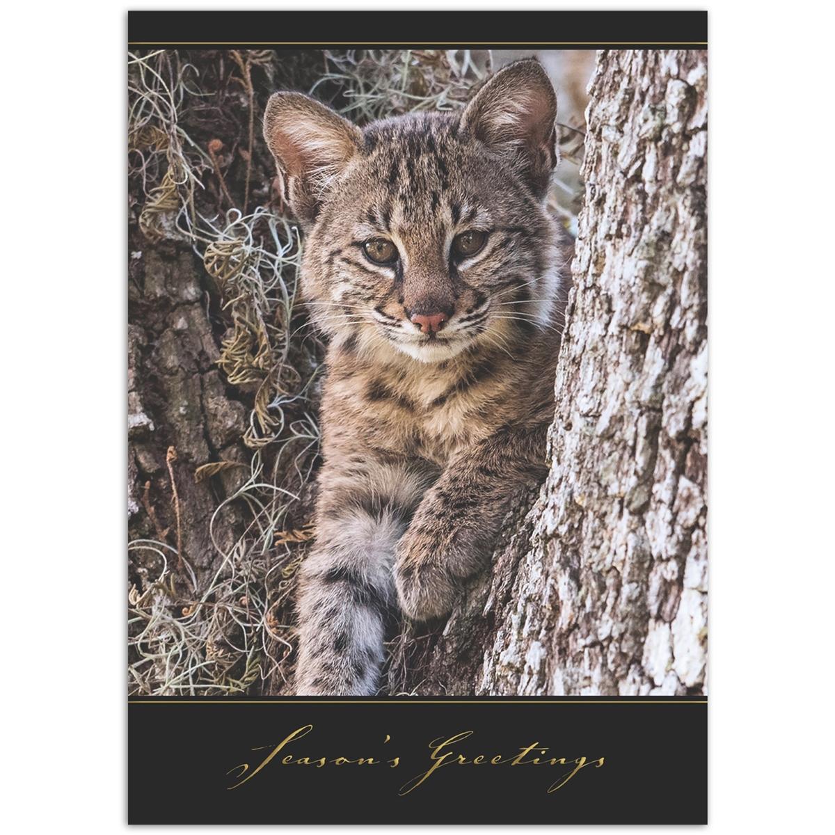 Baby Bobcat Holiday Cards