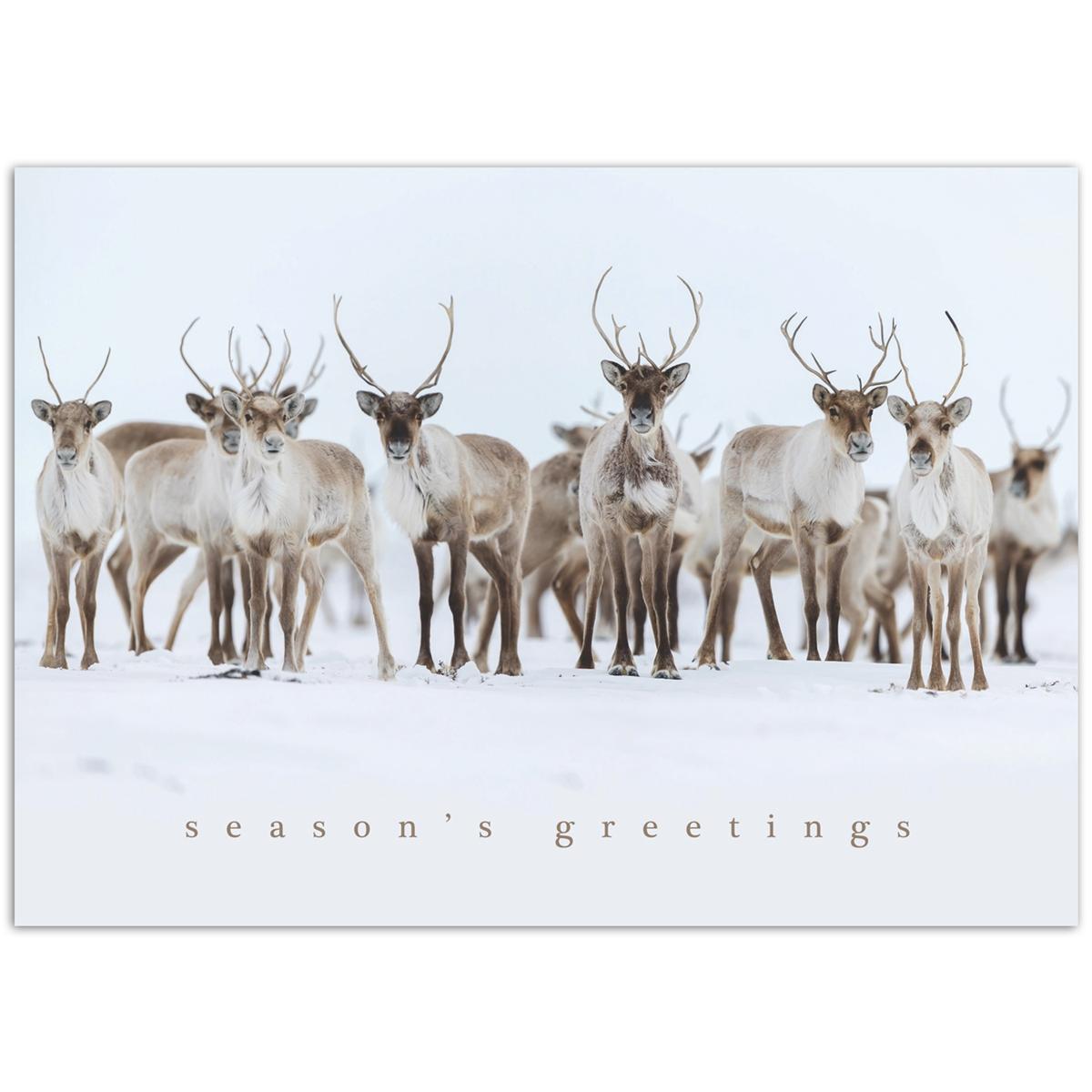 Caribou Curiosity Card